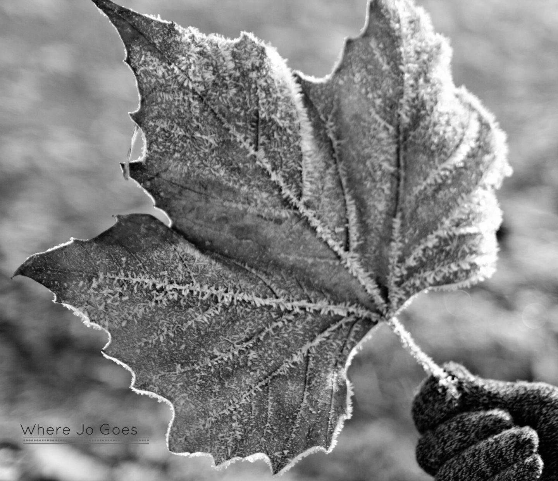 leaf watermarked