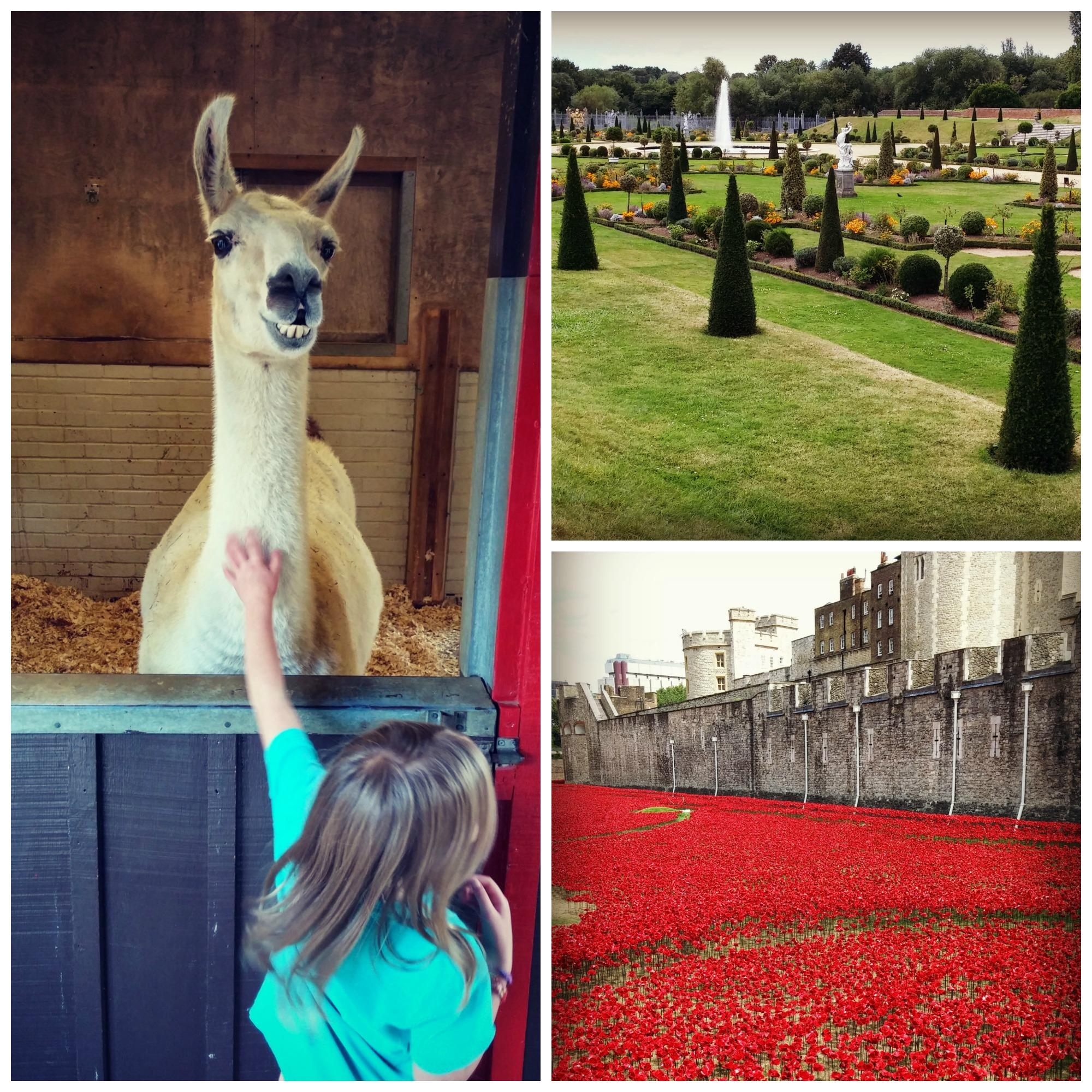 London Zoo, Hampton Court, Tower of London