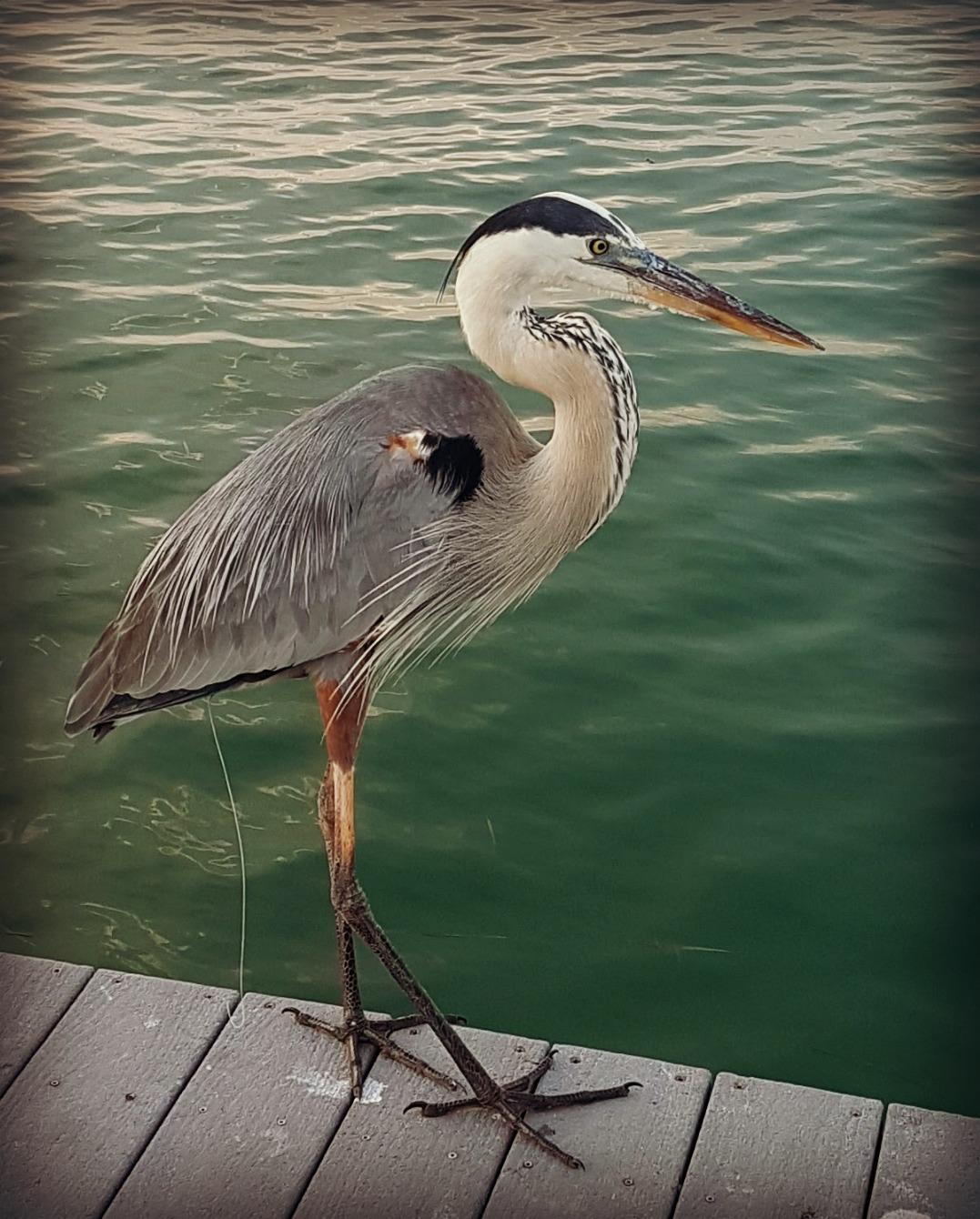 South Seas Island Resort, Captiva Island, Florida