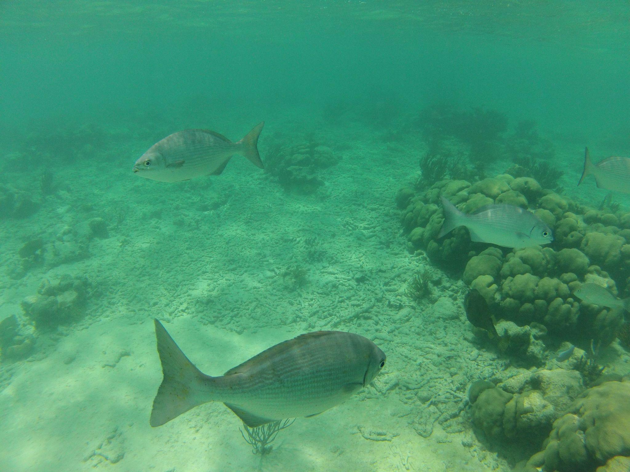 Snorkeling, Akumal Beach, Mexico